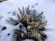 piękno śnieg fotografia stock