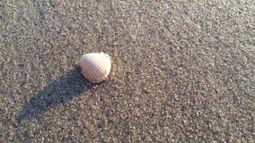 piękno piaskowate skorupy i zerknięcie, fotografia royalty free