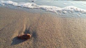 piękno piaskowate skorupy i zerknięcie, zdjęcie royalty free