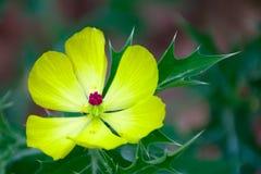 Piękny żółty kwiat z zielonym tłem fotografia royalty free