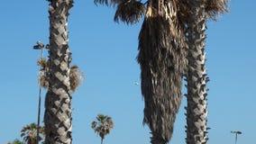 Piękny bananowy drzewo w starym Jaffa, Tel Aviv zdjęcie royalty free
