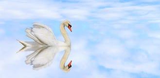 Piękny biały łabędź na spokojnym jeziorze ilustracja wektor