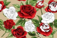 Piękny biały kontur i colered czerwonych róż bezszwowy deseniowy tło royalty ilustracja