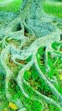 Piękny drzewny bagażnik i krzaki z naturalnym słońce lekkiego skutka tła wizerunkiem i tapetowym projektem zdjęcia stock