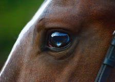 Piękny i ciekawy oko czerwony koń zdjęcie royalty free