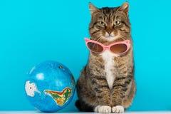 Piękny kot z szkłami od słońca journeyer odpoczynek zdjęcie stock