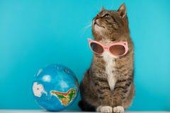 Piękny kot z szkłami od słońca journeyer odpoczynek fotografia stock