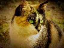 Piękny kot z zielonymi oczami zdjęcie royalty free