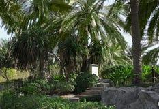 Piękny krajobraz z tropikalnymi palmami obrazy stock