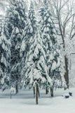 piękny magiczny las po opad śniegu w zima dniu jadł zdjęcie stock