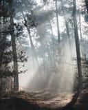 Piękny nasłoneczniony lasowy ślad na mglistym ranku z słońce promieniami zaświeca w górę lasowej podłogi fotografia royalty free
