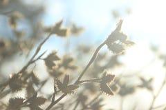 Piękny naturalny tło z delikatnymi bokeh i wiosny sprigs zdjęcie royalty free