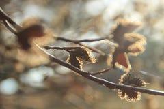 Piękny naturalny tło z delikatnymi bokeh i wiosny sprigs obraz stock