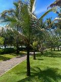 Piękny ogród przeciw niebieskiemu niebu i gładzi zielonego gazon obraz stock