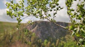 Piękny plan gałąź kiwa w wiatrze piękna krajobrazowa góry zbiory wideo