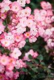 Piękny szczegół perfumowi ogródów botanicznych kwiaty fotografia stock