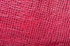 Piękny tło czerwona prawdziwa skóra Zakończenie macros zdjęcia royalty free