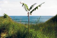 Piękny widok błękitna woda morska od piaskowatej falezy z trawą i drzewem Krajobraz plażowa faleza i ocean Wakacje pojęcie zdjęcie royalty free