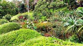 Piękny Zielonawy Ogrodowy widok zdjęcie stock