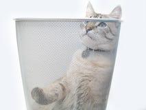 Pièce 1 de chat images libres de droits