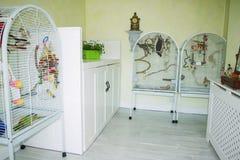 Pièce d'oiseau dans la maison domestique consacrée aux perroquets d'animal familier Photo stock