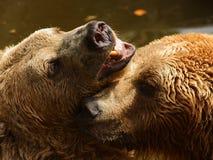Pièce d'ours Photographie stock libre de droits