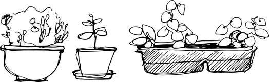 Pièce de fleur de croquis dans un pot de fleurs Photo libre de droits
