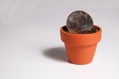 Pièce de monnaie américaine du dollar plantée dans un pot Image libre de droits