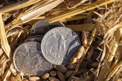 Pièce de monnaie dans la paille Image libre de droits