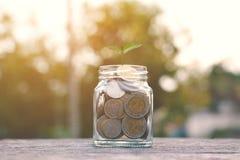 Pièce de monnaie de la plante en verre et verte image libre de droits