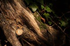 Pièce de monnaie de peu en bois photographie stock