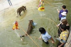 Pièce de touristes avec des tigres dans l'eau Photos libres de droits
