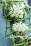 Pièce maîtresse florale Photo libre de droits