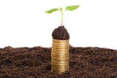 Pièces de monnaie d'or dans le sol avec la jeune usine Concept de croissance d'argent Photos libres de droits