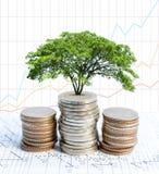 Pièces de monnaie de double exposition et grand élevage de plante verte Photo stock