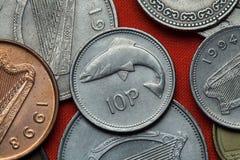 Pièces de monnaie de l'Irlande Saumons Photos stock