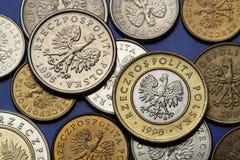 Pièces de monnaie de la Pologne Photographie stock libre de droits