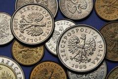 Pièces de monnaie de la Pologne Photo libre de droits