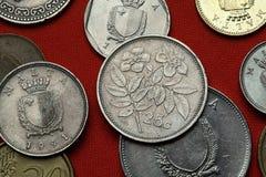 Pièces de monnaie de Malte L'arbre s'est levé (les sempervirens de Rosa) images stock