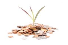 Pièces de monnaie dispersées autour de la base d'une jeune plante de bébé - rentable Photographie stock