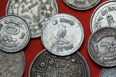 Pièces de monnaie du Népal Monal de l'Himalaya (impejanus de Lophophorus) Images stock