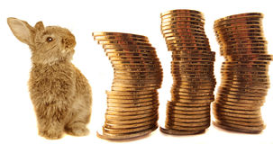 Pièces de monnaie et lapin Photo libre de droits