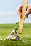 Pièces de monnaie sur l'herbe Image stock