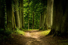 Piège dans la forêt Images libres de droits