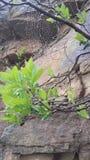 Piège de pluie d'araignée Photo libre de droits