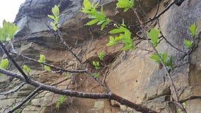 Piège de pluie d'araignée Photos libres de droits