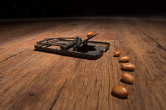 Piège de souris Photographie stock libre de droits