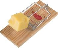 Piège de souris amorcé avec un morceau de fromage, d'isolement Photos libres de droits