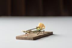 Piège de souris sur le blanc Photographie stock libre de droits
