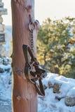 Piège pour les ours, Etats-Unis photos libres de droits